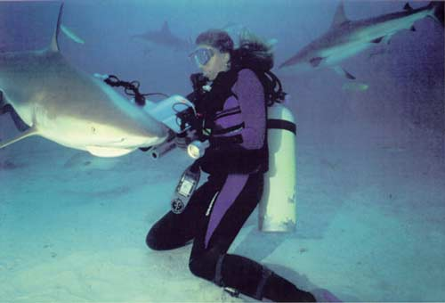 AQUAWOMAN FILMING SHARKS ~ aquawoman-id#-EL002
