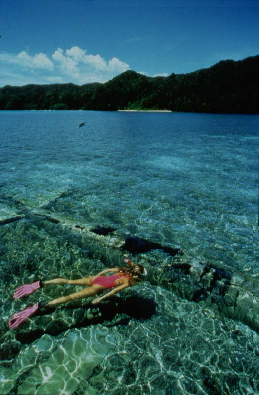 ZERO FIGHTER AT 8 feet/2Meters - Palau, Micronesia, Pacific Ocean ~ id# aquawoman GB007
